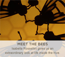 Meet the Bees